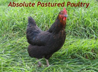 Absolute Pastured Poultry